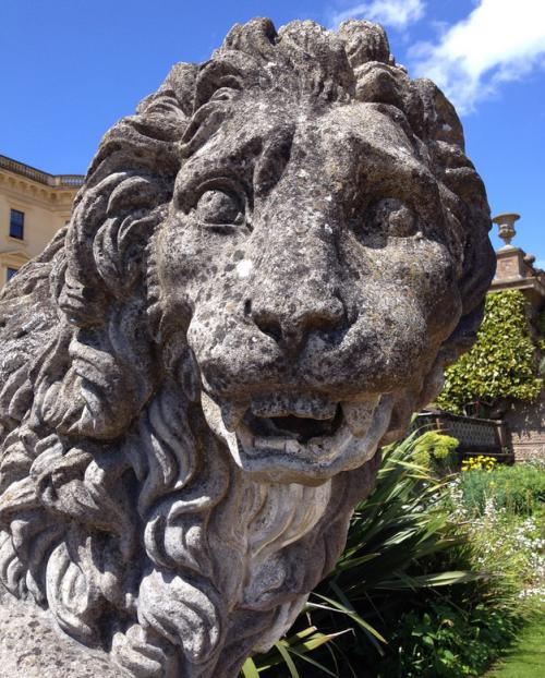 3b236-lions