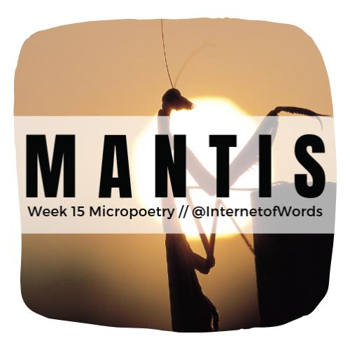 2019 Week 15 Micro